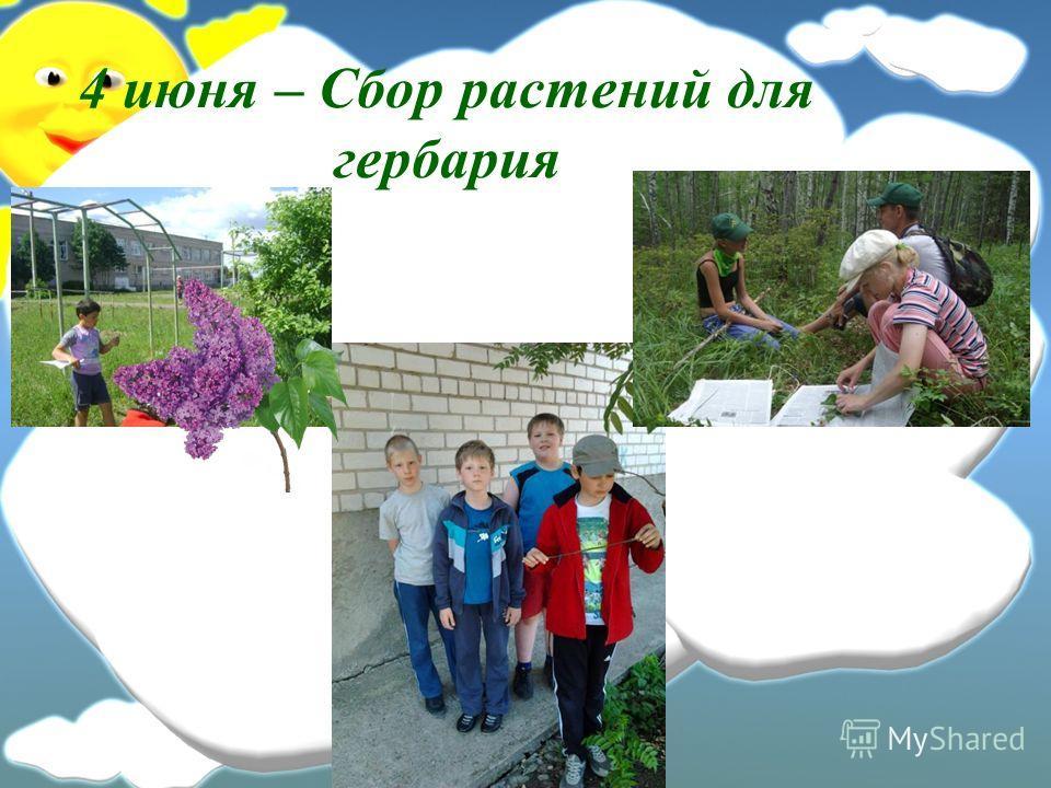 4 июня – Сбор растений для гербария
