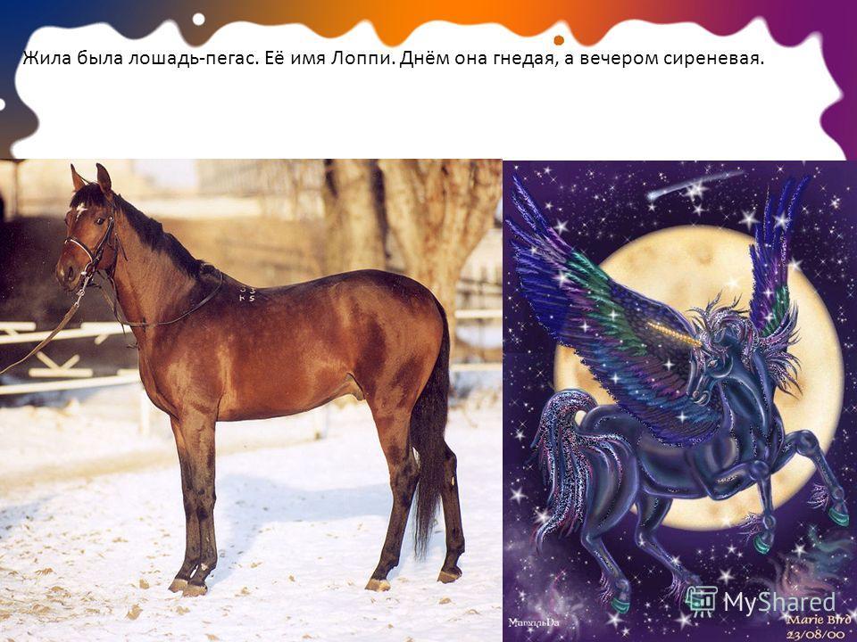 Жила была лошадь-пегас. Её имя Лоппи. Днём она гнедая, а вечером сиреневая.