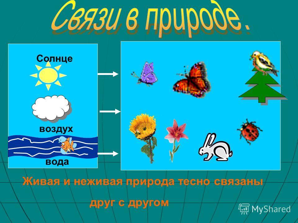 Солнце вода воздух Живая и неживая природа тесно связаны друг с другом