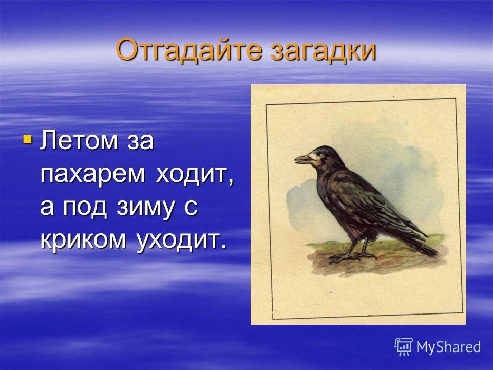 Отгадайте загадки Летом за пахарем ходит, а под зиму с криком уходит. Летом за пахарем ходит, а под зиму с криком уходит.
