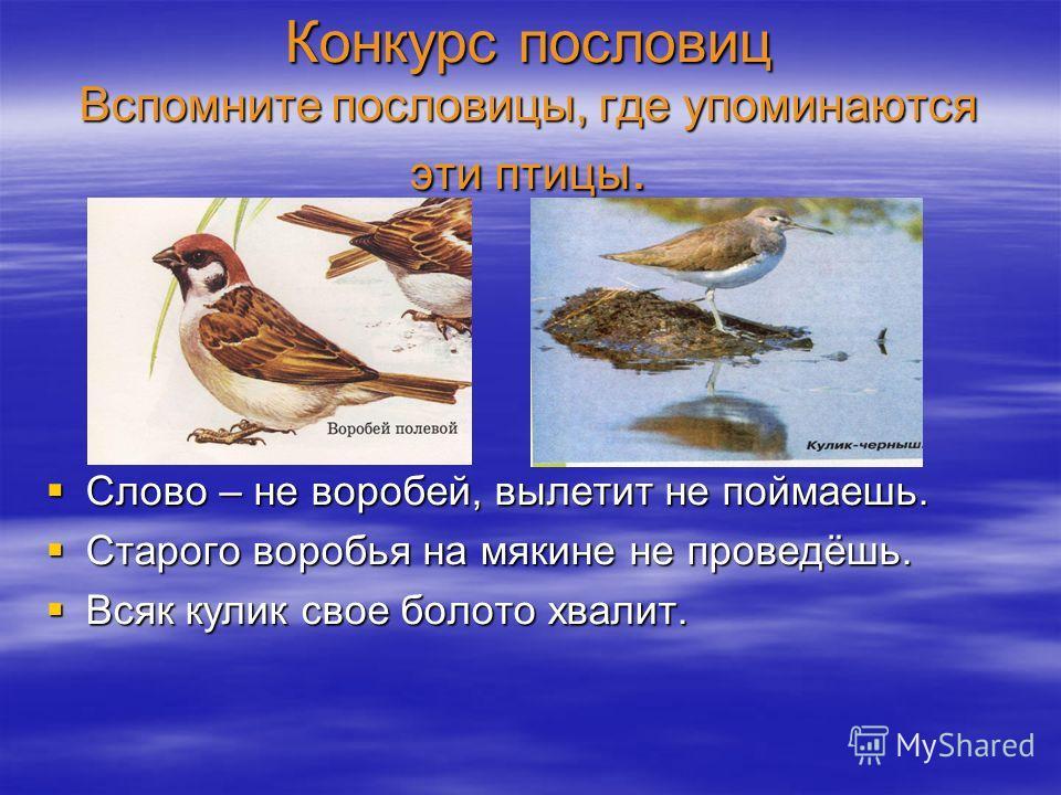 Конкурс пословиц Вспомните пословицы, где упоминаются эти птицы. Слово – не воробей, вылетит не поймаешь. Слово – не воробей, вылетит не поймаешь. Старого воробья на мякине не проведёшь. Старого воробья на мякине не проведёшь. Всяк кулик свое болото