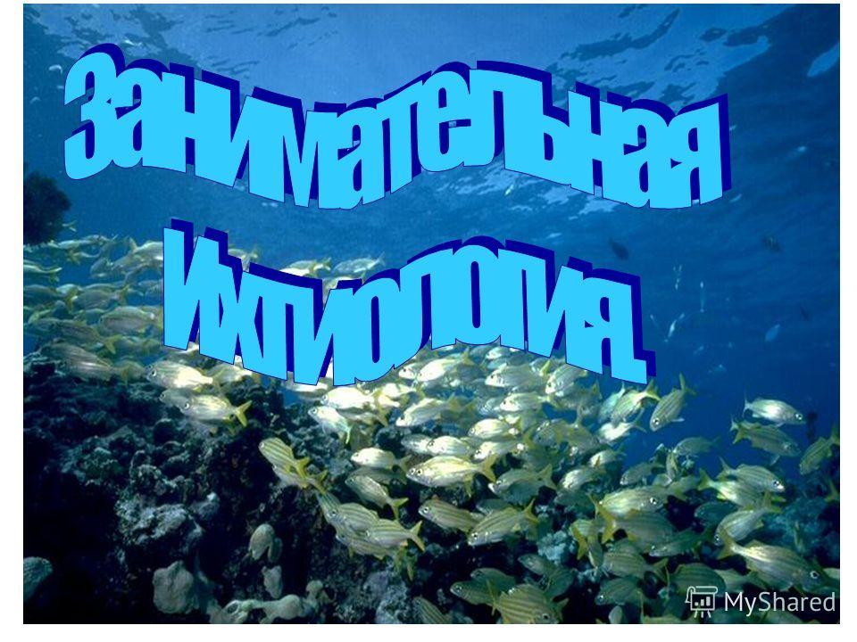 Ханты - Мансийский автономный округ – Югра Кондинский район Муниципальное общеобразовательное учреждение Морткинская средняя общеобразовательная школа Предмет биология; класс 7 Тип хордовые; надкласс рыбы. Код 597