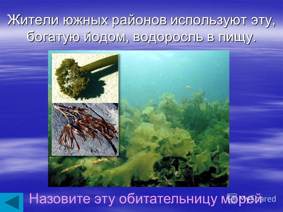Это вещество, полученное из красных водорослей, используют в микробиологии и кондитерской промышленности. Как называется это вещество?
