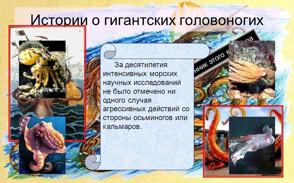 Истории о гигантских головоногих Осьминог высасывает вас Вы пленник этого кошмара За десятилетия интенсивных морских научных исследований не было отмечено ни одного случая агрессивных действий со стороны осьминогов или кальмаров.