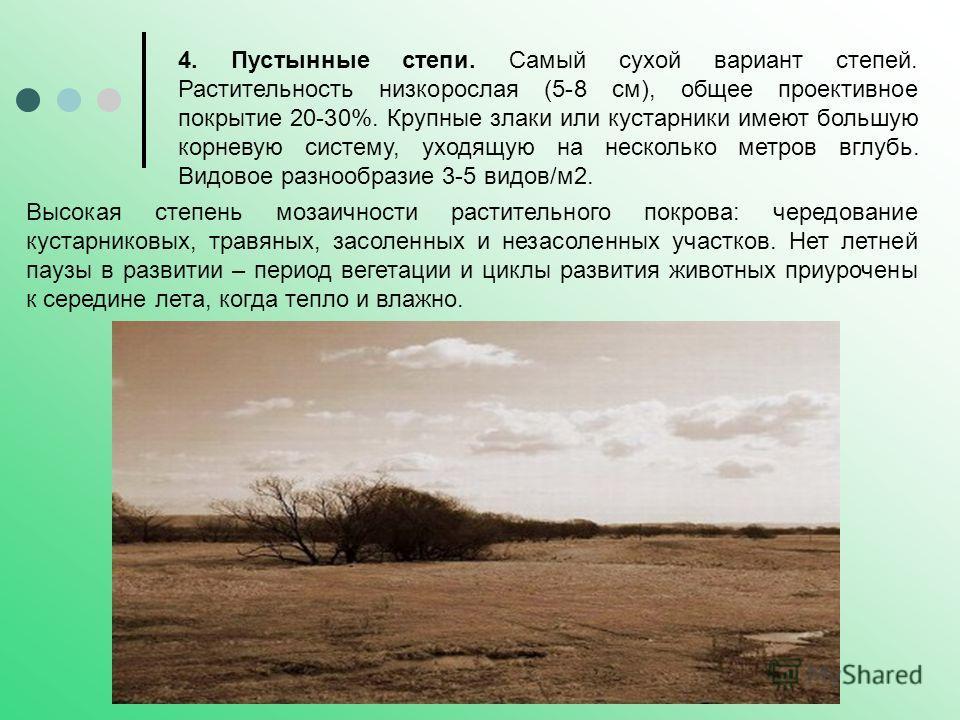 4. Пустынные степи. Самый сухой вариант степей. Растительность низкорослая (5-8 см), общее проективное покрытие 20-30%. Крупные злаки или кустарники имеют большую корневую систему, уходящую на несколько метров вглубь. Видовое разнообразие 3-5 видов/м