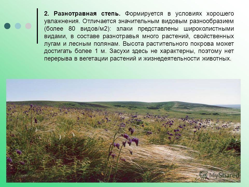 2. Разнотравная степь. Формируется в условиях хорошего увлажнения. Отличается значительным видовым разнообразием (более 80 видов/м2): злаки представлены широколистными видами, в составе разнотравья много растений, свойственных лугам и лесным полянам.