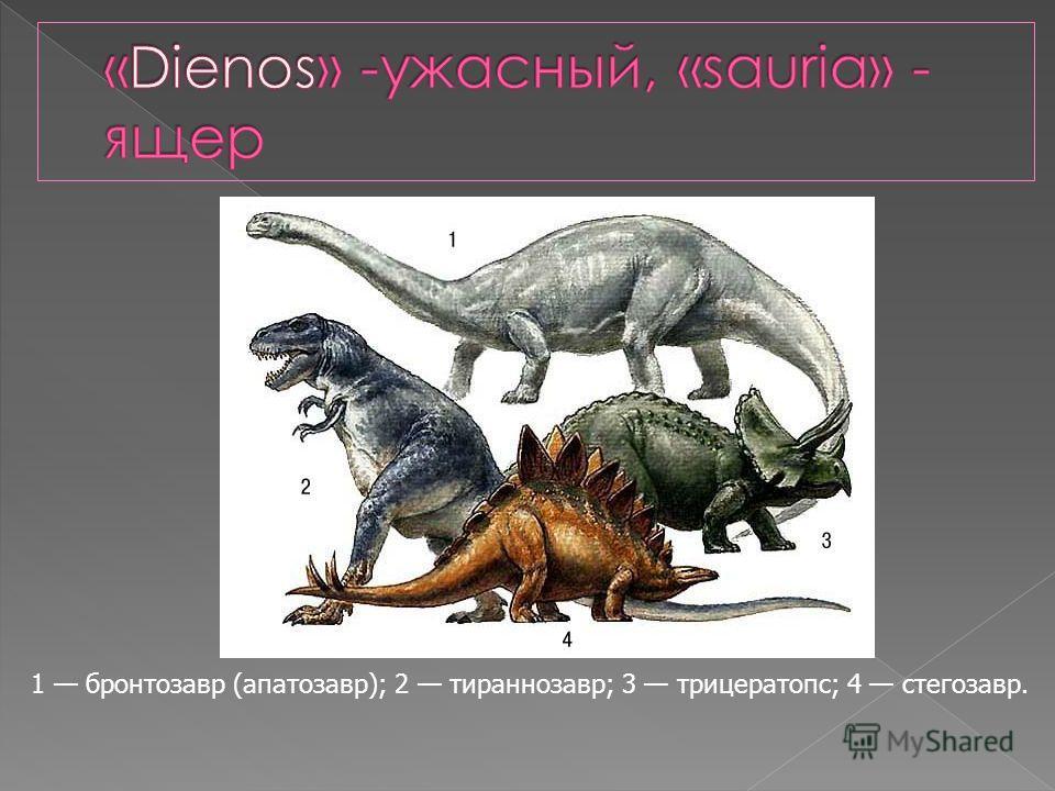 1 бронтозавр (апатозавр); 2 тираннозавр; 3 трицератопс; 4 стегозавр.