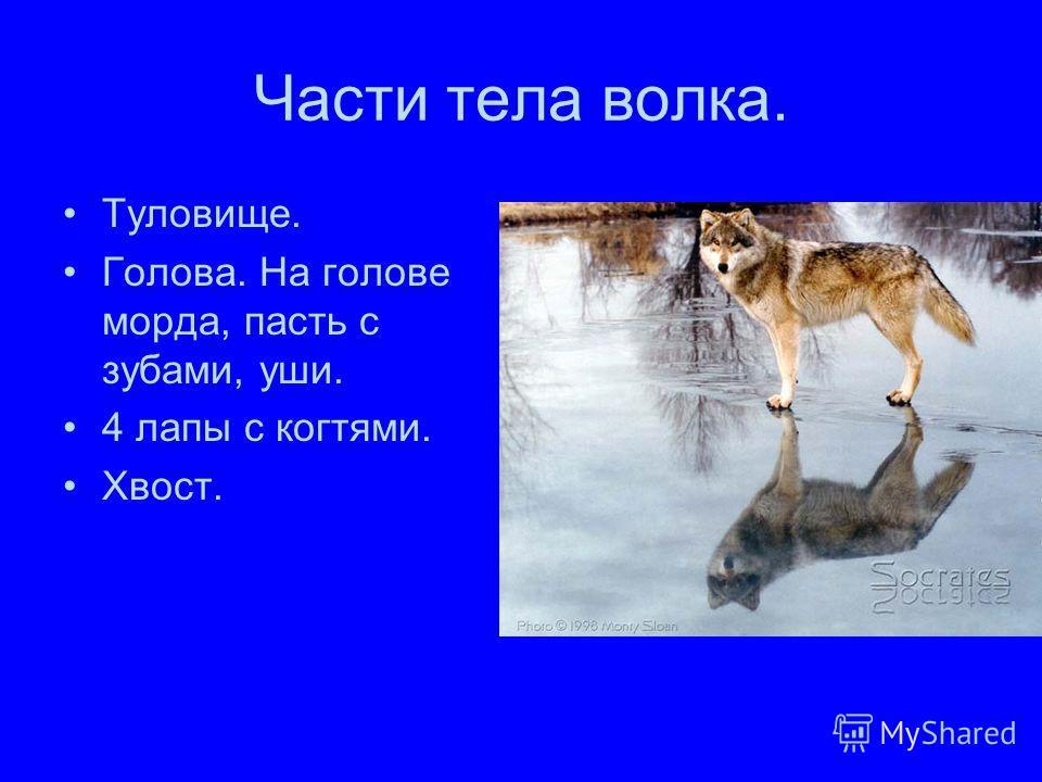 Части тела волка. Туловище. Голова. На голове морда, пасть с зубами, уши. 4 лапы с когтями. Хвост.