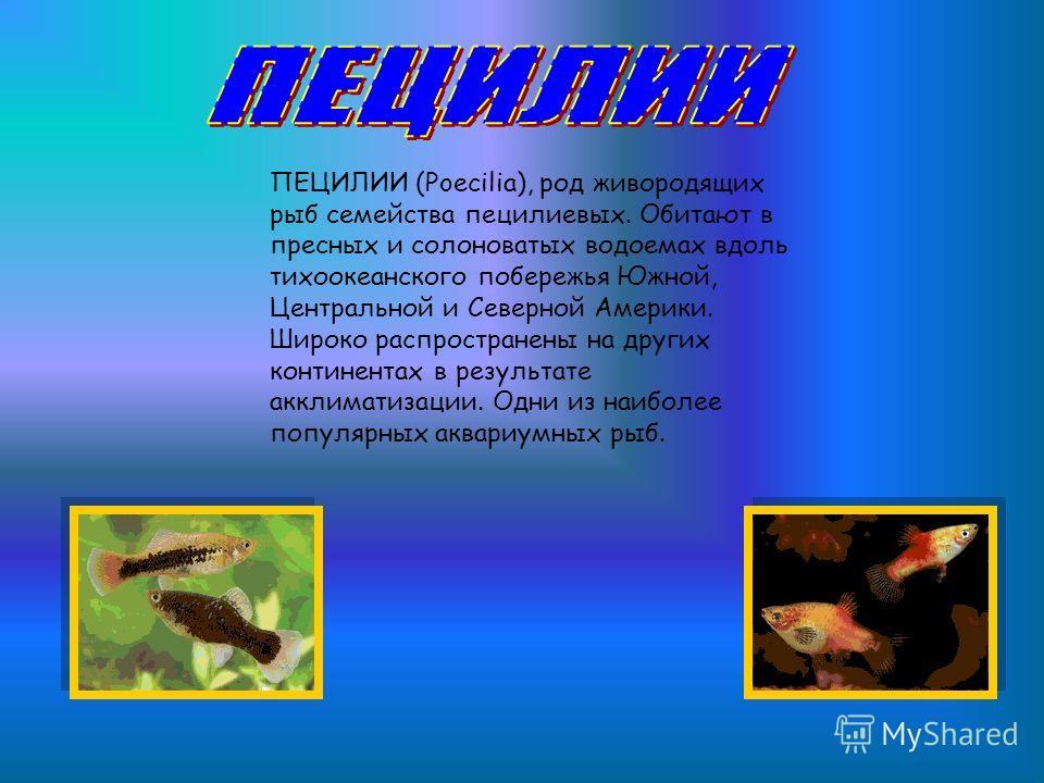 ПЕЦИЛИИ (Poecilia), род живородящих рыб семейства пецилиевых. Обитают в пресных и солоноватых водоемах вдоль тихоокеанского побережья Южной, Центральной и Северной Америки. Широко распространены на других континентах в результате акклиматизации. Одни