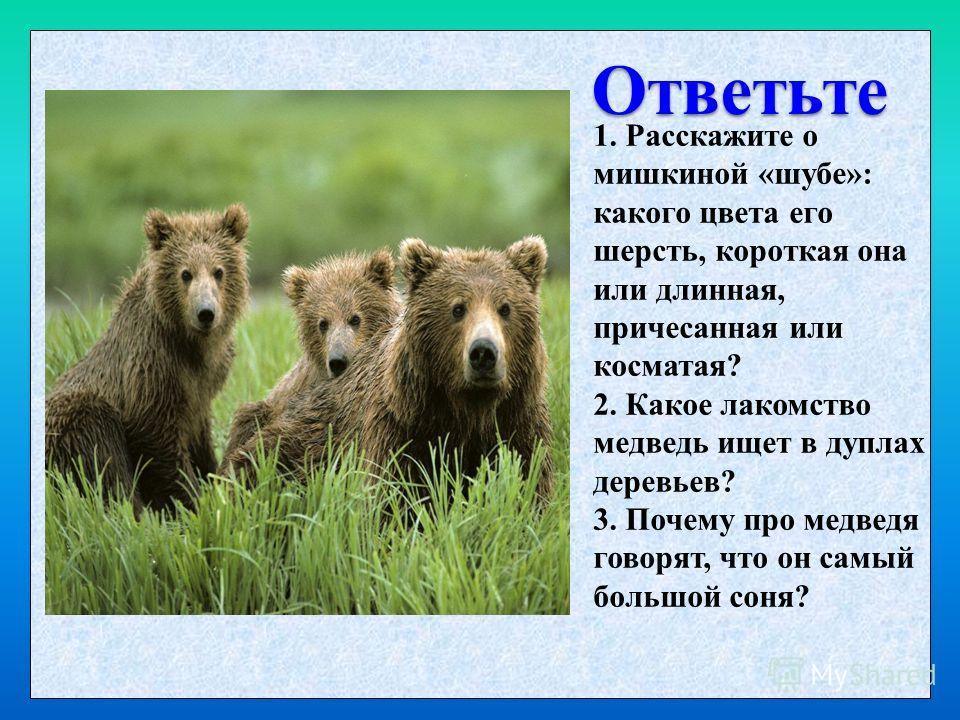 Ответьте 1. Расскажите о мишкиной «шубе»: какого цвета его шерсть, короткая она или длинная, причесанная или косматая? 2. Какое лакомство медведь ищет в дуплах деревьев? 3. Почему про медведя говорят, что он самый большой соня?