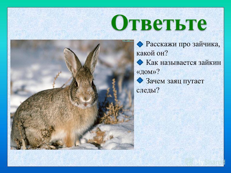 Ответьте Расскажи про зайчика, какой он? Как называется зайкин «дом»? Зачем заяц путает следы?