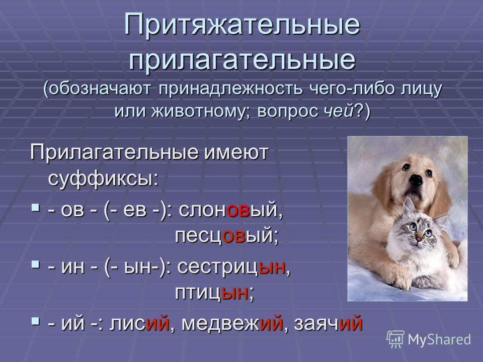 Притяжательные прилагательные (обозначают принадлежность чего-либо лицу или животному; вопрос чей?) Прилагательные имеют суффиксы: - ов - (- ев -): слоновый, песцовый; - ов - (- ев -): слоновый, песцовый; - ин - (- ын-): сестрицын, птицын; - ин - (-