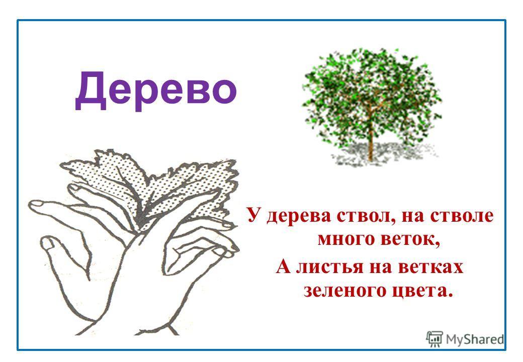 Дерево У дерева ствол, на стволе много веток, А листья на ветках зеленого цвета.