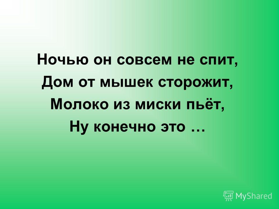 ДЕЛЬФИН КИТ МОРСКИЕ ЖИВОТНЫЕ