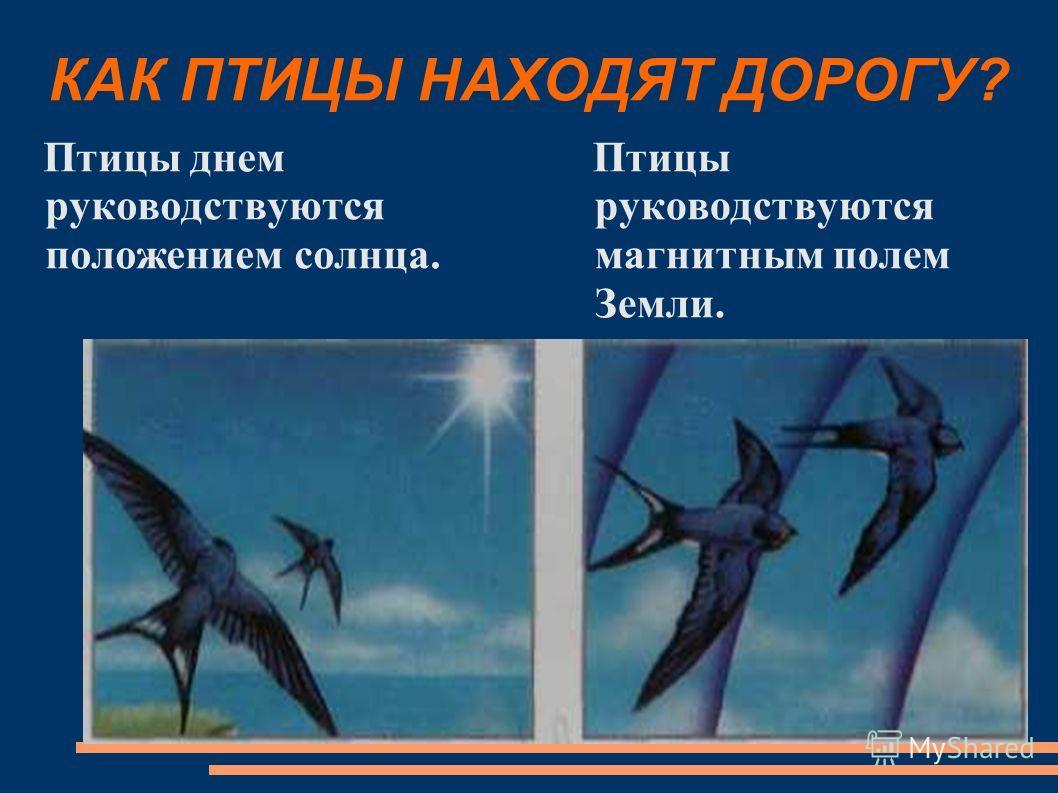 КАК ПТИЦЫ НАХОДЯТ ДОРОГУ? Птицы днем руководствуются положением солнца. Птицы руководствуются магнитным полем Земли.