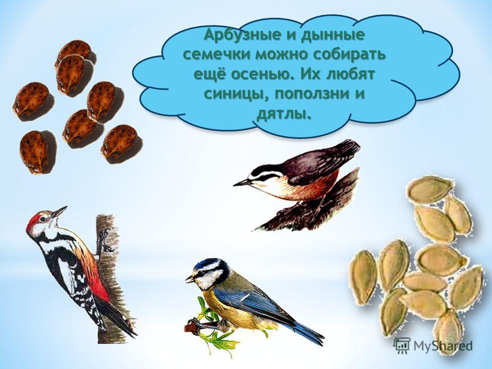 Чем же можно подкармливать птиц?