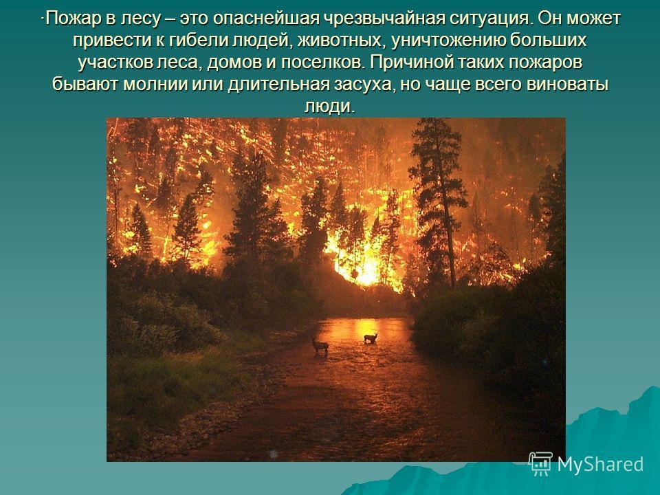 ·Пожар в лесу – это опаснейшая чрезвычайная ситуация. Он может привести к гибели людей, животных, уничтожению больших участков леса, домов и поселков. Причиной таких пожаров бывают молнии или длительная засуха, но чаще всего виноваты люди.