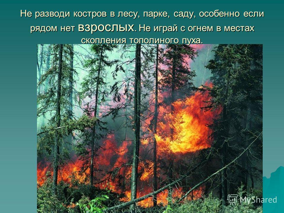 Не разводи костров в лесу, парке, саду, особенно если рядом нет взрослых. Не играй с огнем в местах скопления тополиного пуха.