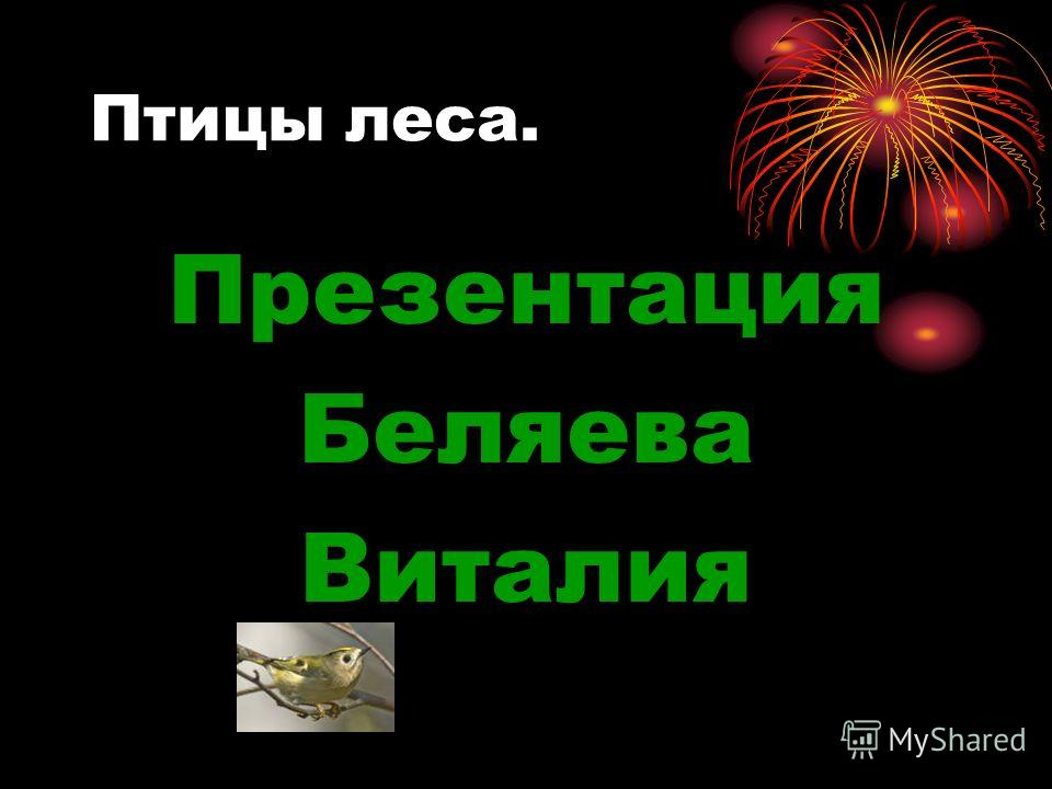 Птицы леса. Презентация Беляева Виталия
