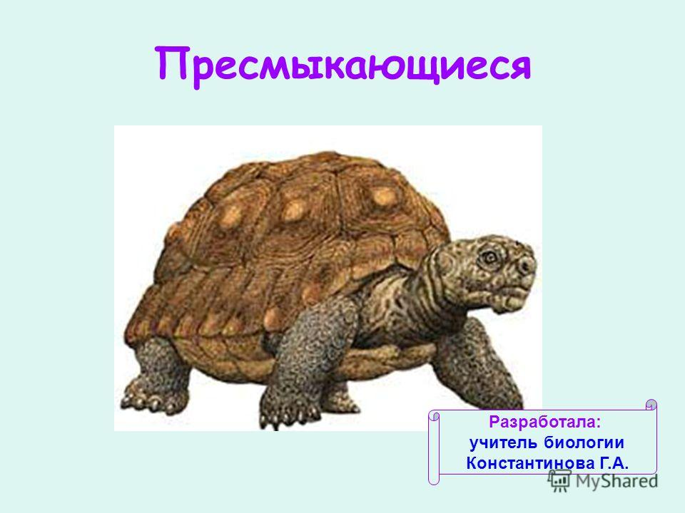 Пресмыкающиеся Разработала: учитель биологии Константинова Г.А.