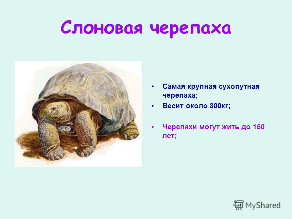 Слоновая черепаха Самая крупная сухопутная черепаха; Весит около 300кг; Черепахи могут жить до 150 лет;