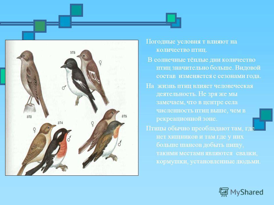 Погодные условия т влияют на количество птиц. В солнечные тёплые дни количество птиц значительно больше. Видовой состав изменяется с сезонами года. На жизнь птиц влияет человеческая деятельность. Не зря же мы замечаем, что в центре села численность п