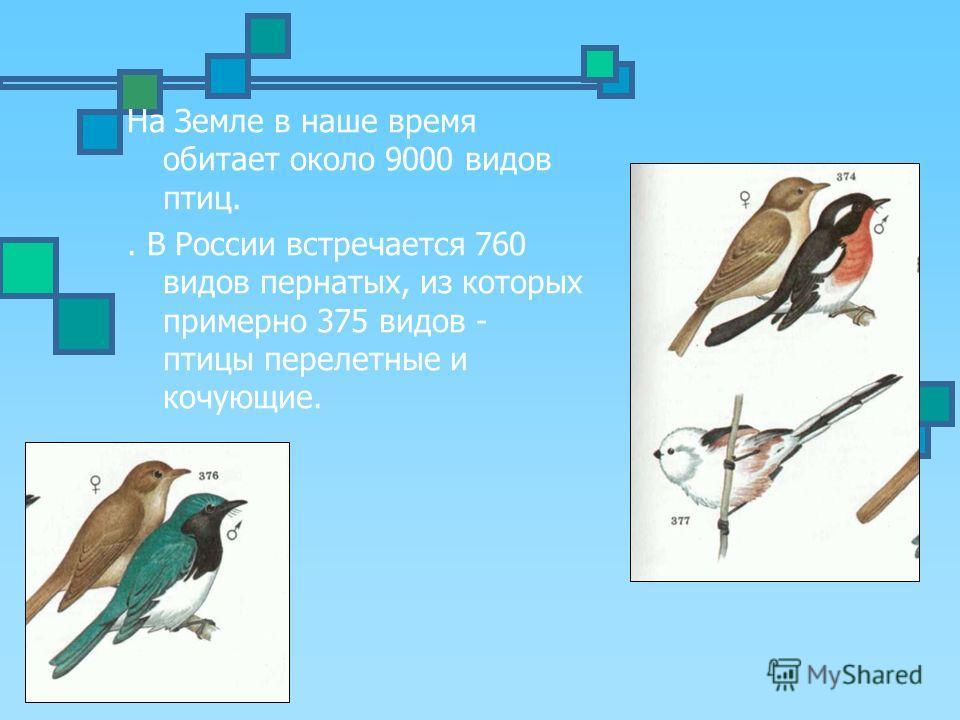 На Земле в наше время обитает около 9000 видов птиц.. В России встречается 760 видов пернатых, из которых примерно 375 видов - птицы перелетные и кочующие.