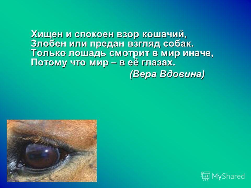 Хищен и спокоен взор кошачий, Злобен или предан взгляд собак. Только лошадь смотрит в мир иначе, Потому что мир – в её глазах. Хищен и спокоен взор кошачий, Злобен или предан взгляд собак. Только лошадь смотрит в мир иначе, Потому что мир – в её глаз