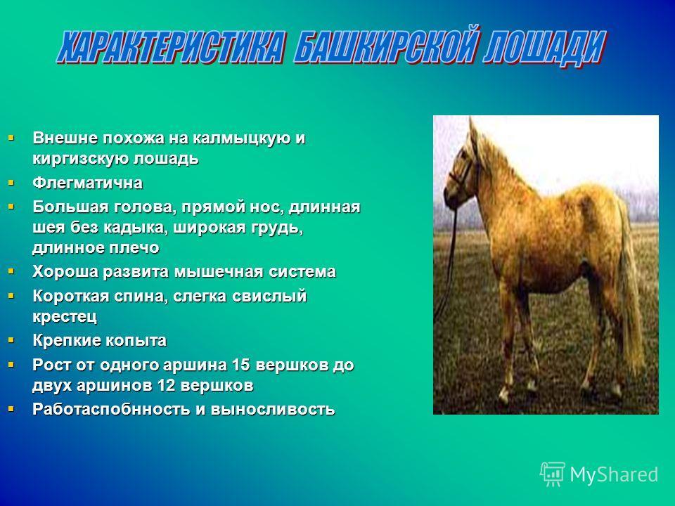 Внешне похожа на калмыцкую и киргизскую лошадь Внешне похожа на калмыцкую и киргизскую лошадь Флегматична Флегматична Большая голова, прямой нос, длинная шея без кадыка, широкая грудь, длинное плечо Большая голова, прямой нос, длинная шея без кадыка,