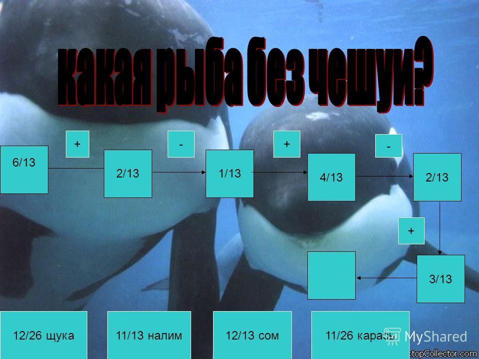 6/13 2/131/13 4/132/13 3/13 12/26 щука11/13 налим12/13 сом11/26 карась +- + - +