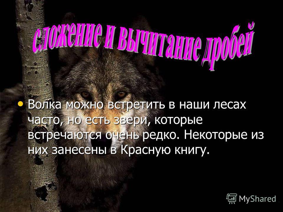 Волка можно встретить в наши лесах часто, но есть звери, которые встречаются очень редко. Некоторые из них занесены в Красную книгу. Волка можно встретить в наши лесах часто, но есть звери, которые встречаются очень редко. Некоторые из них занесены в