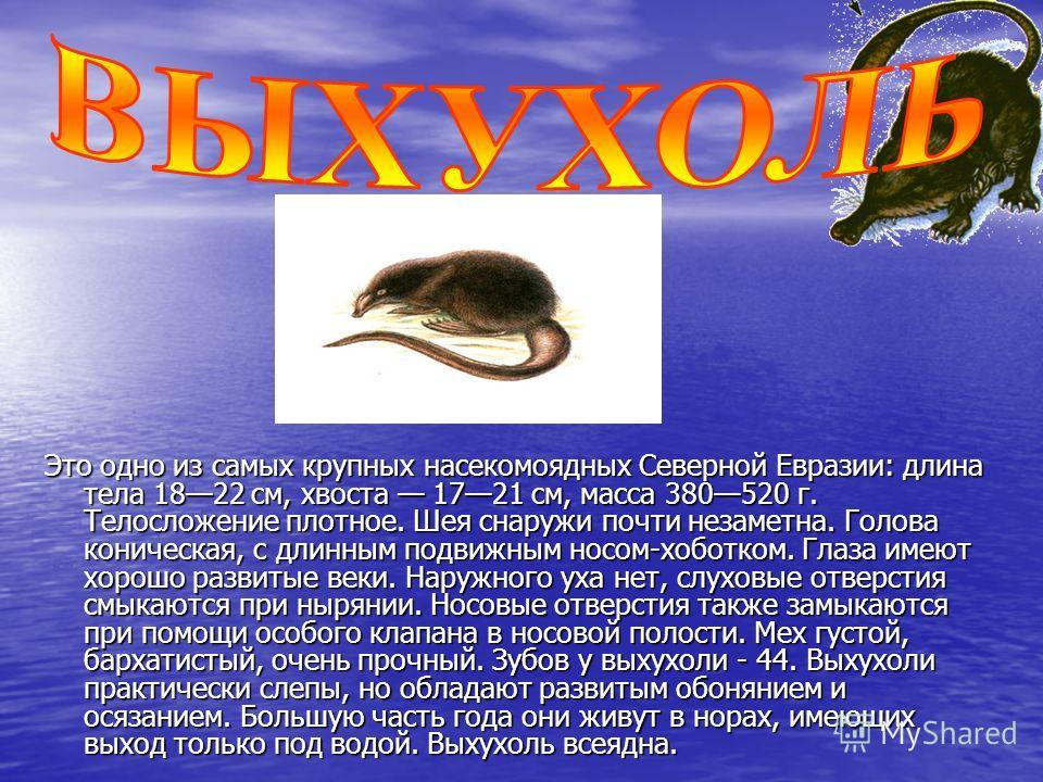 Это одно из самых крупных насекомоядных Северной Евразии: длина тела 1822 см, хвоста 1721 см, масса 380520 г. Телосложение плотное. Шея снаружи почти незаметна. Голова коническая, с длинным подвижным носом-хоботком. Глаза имеют хорошо развитые веки.