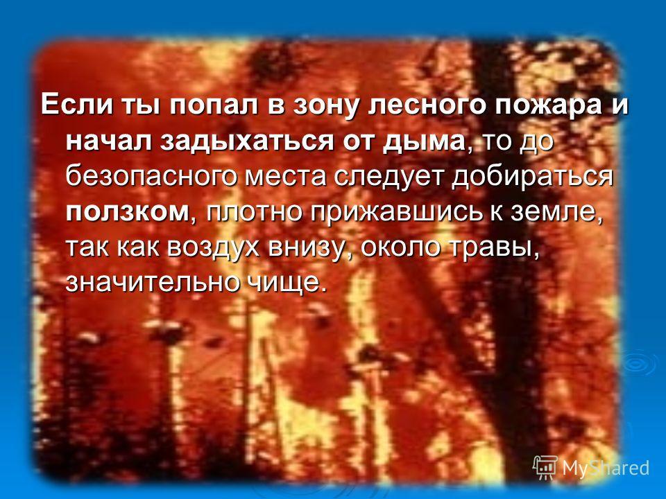 Если ты попал в зону лесного пожара и начал задыхаться от дыма, то до безопасного места следует добираться ползком, плотно прижавшись к земле, так как воздух внизу, около травы, значительно чище.