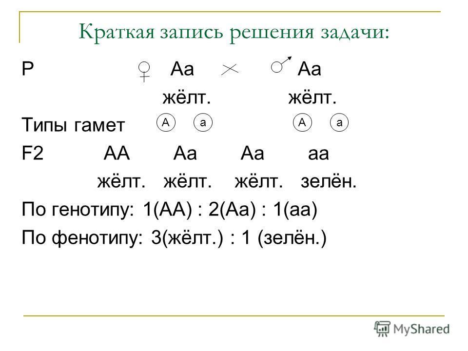 Краткая запись решения задачи: Р Аа Аа жёлт. жёлт. Типы гамет F2 АА Аа Аа аа жёлт. жёлт. жёлт. зелён. По генотипу: 1(АА) : 2(Аа) : 1(аа) По фенотипу: 3(жёлт.) : 1 (зелён.) АаАа