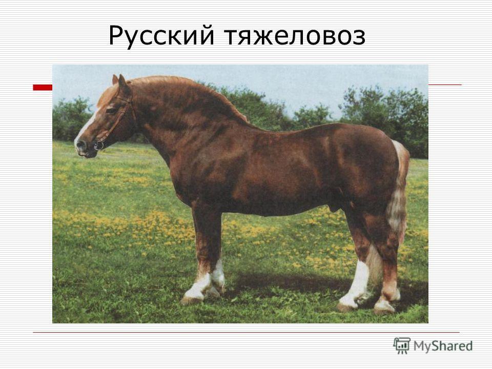 Русский тяжеловоз