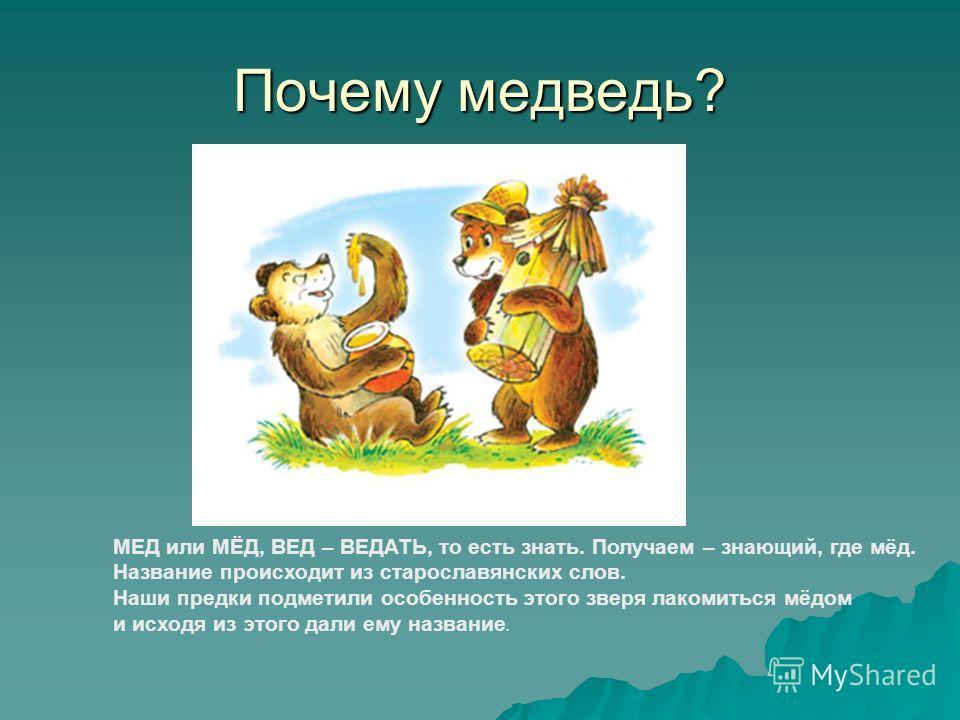 Почему медведь? МЕД или МЁД, ВЕД – ВЕДАТЬ, то есть знать. Получаем – знающий, где мёд. Название происходит из старославянских слов. Наши предки подметили особенность этого зверя лакомиться мёдом и исходя из этого дали ему название.