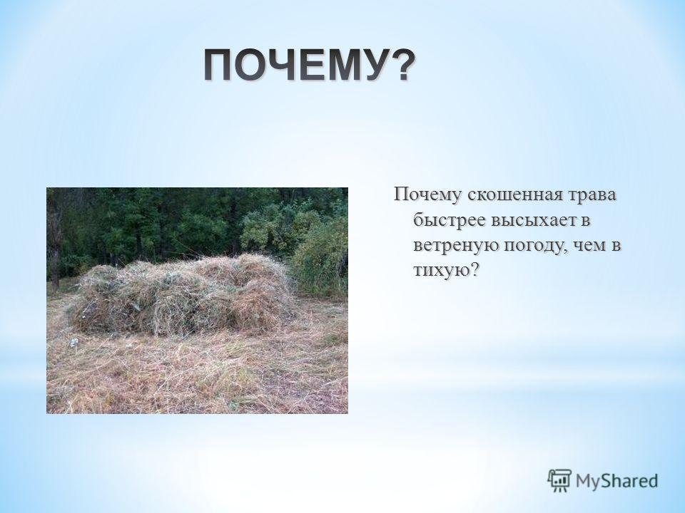 Почему скошенная трава быстрее высыхает в ветреную погоду, чем в тихую ? Почему скошенная трава быстрее высыхает в ветреную погоду, чем в тихую ?