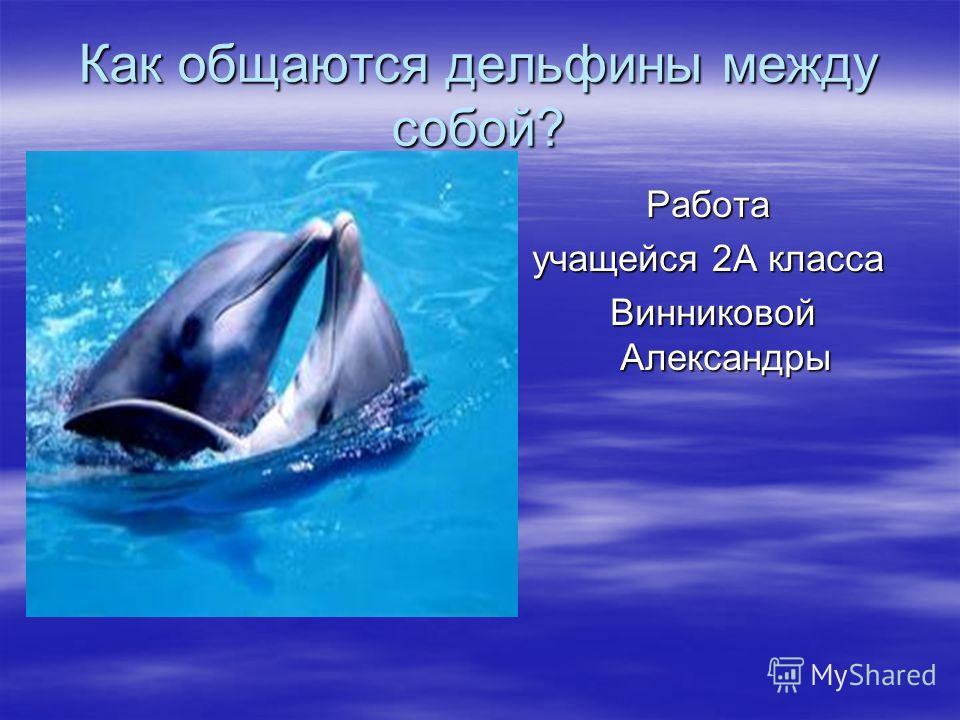 Как общаются дельфины между собой? Работа учащейся 2А класса Винниковой Александры Винниковой Александры