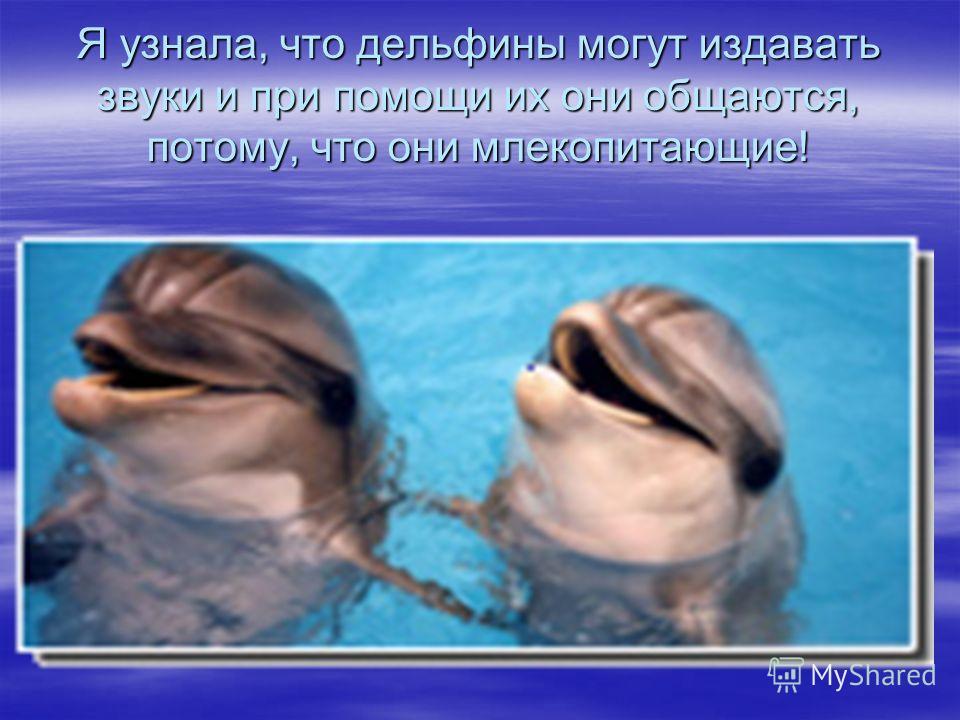 Я узнала, что дельфины могут издавать звуки и при помощи их они общаются, потому, что они млекопитающие!