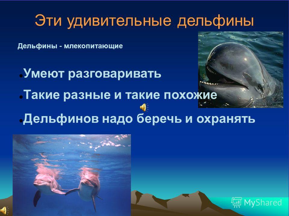 Эти удивительные дельфины Дельфины - млекопитающие Умеют разговаривать Такие разные и такие похожие Дельфинов надо беречь и охранять