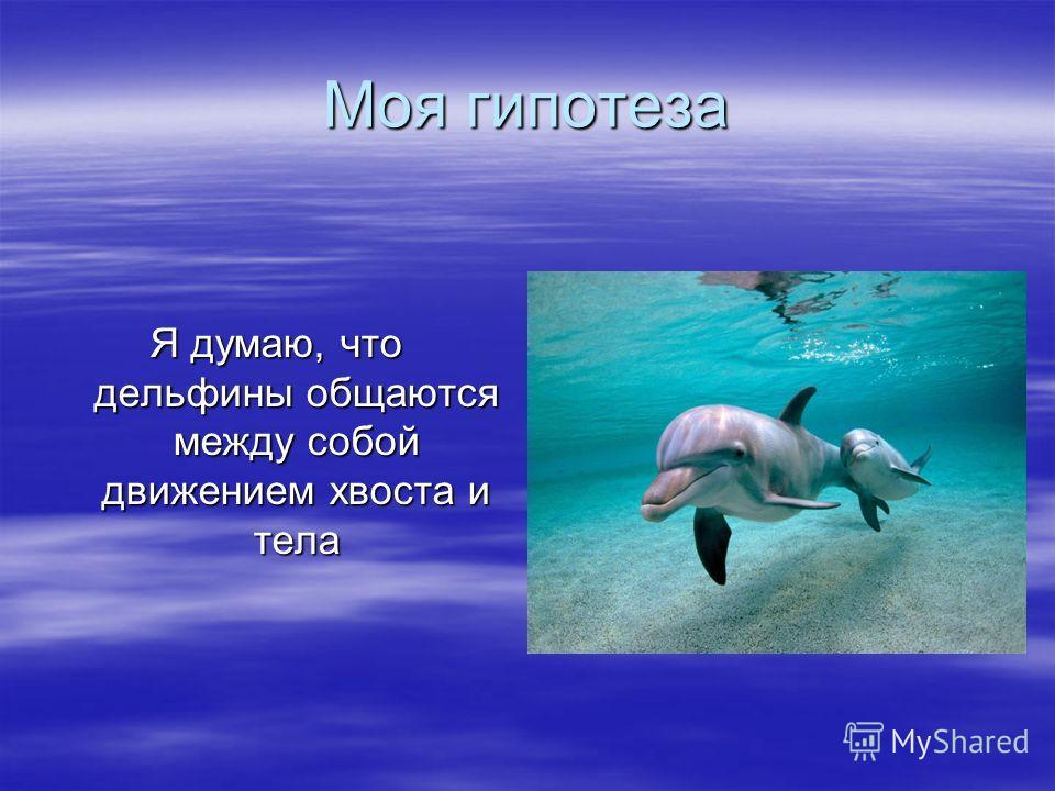 Моя гипотеза Я думаю, что дельфины общаются между собой движением хвоста и тела