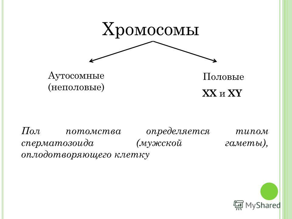 Хромосомы Аутосомные (неполовые) Половые XX и XY Пол потомства определяется типом сперматозоида (мужской гаметы), оплодотворяющего клетку