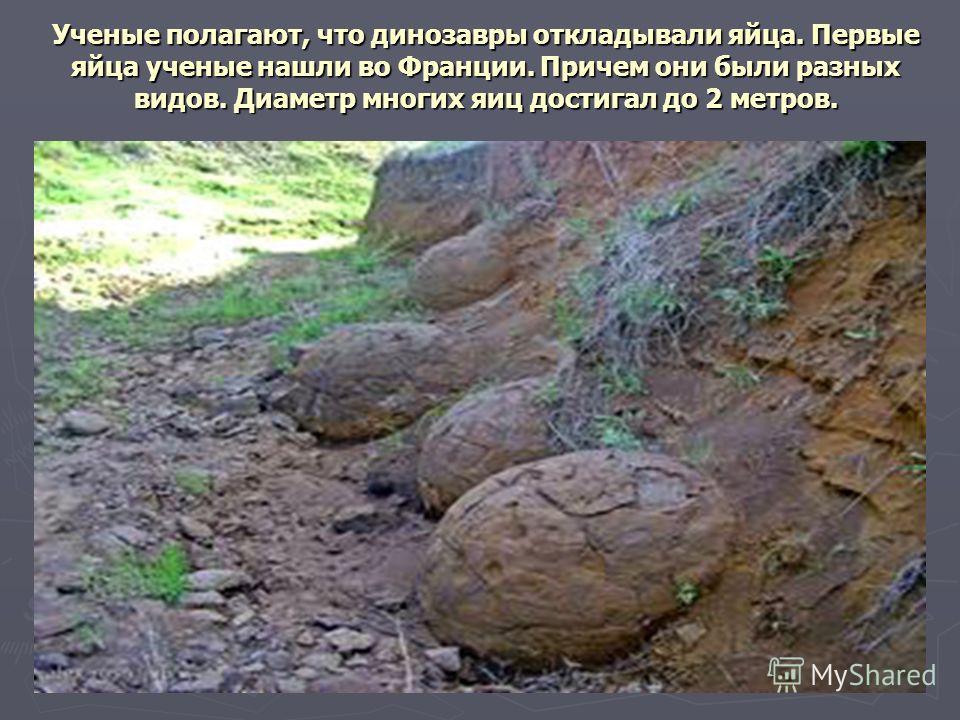 Ученые полагают, что динозавры откладывали яйца. Первые яйца ученые нашли во Франции. Причем они были разных видов. Диаметр многих яиц достигал до 2 метров.