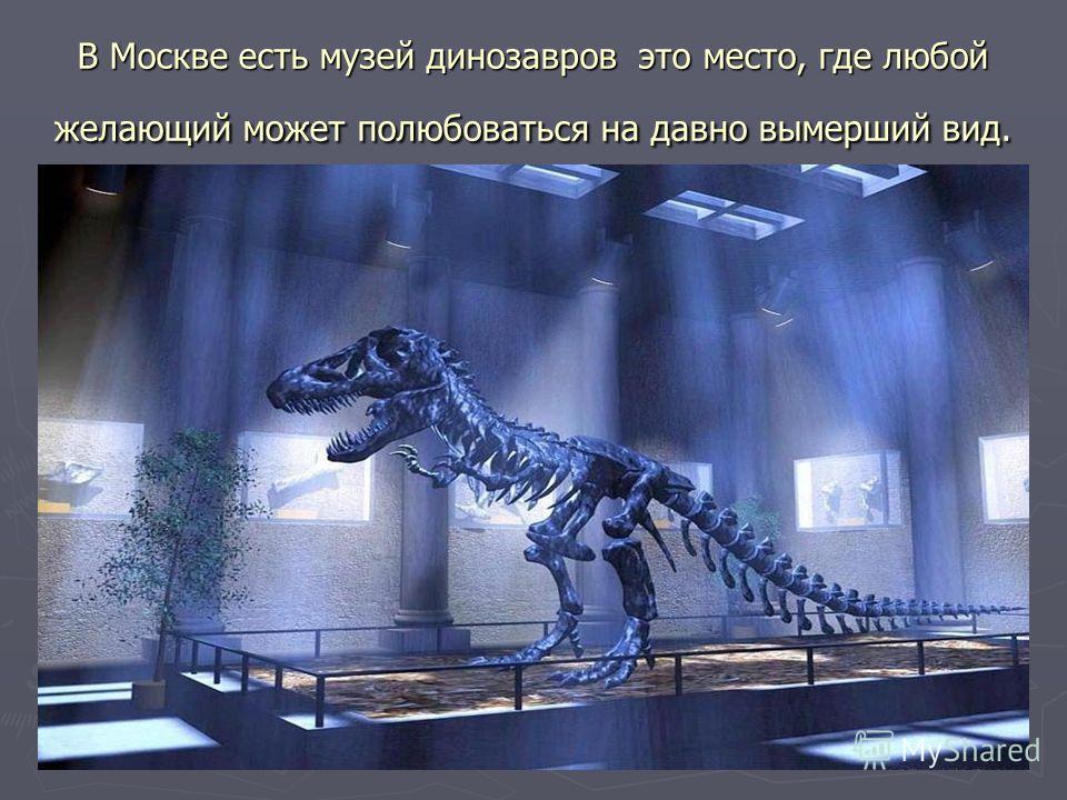 В Москве есть музей динозавров это место, где любой желающий может полюбоваться на давно вымерший вид.