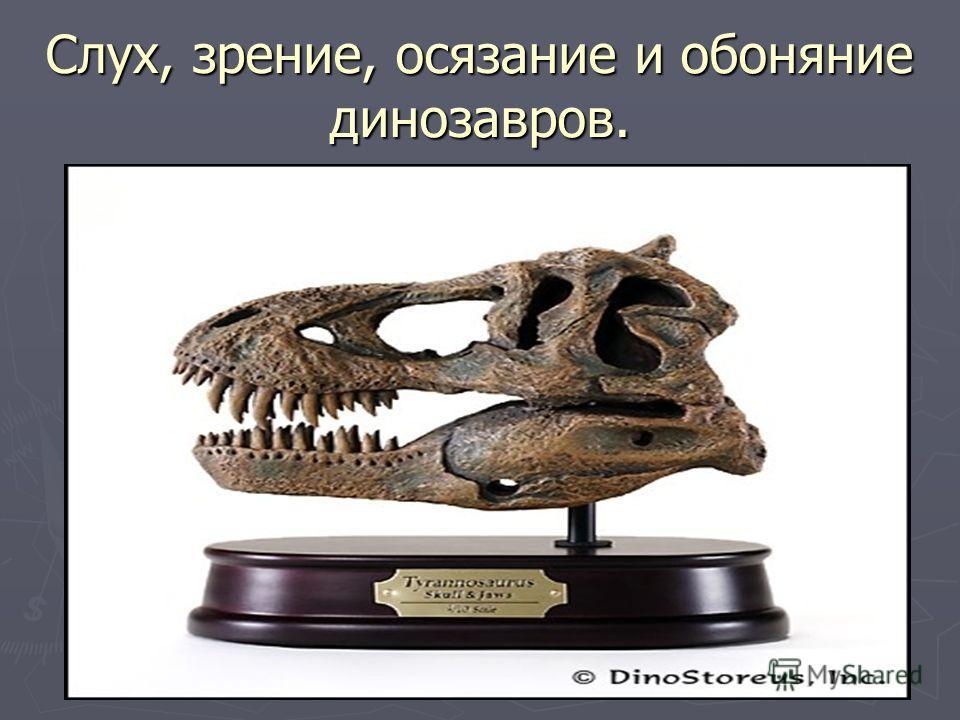 Слух, зрение, осязание и обоняние динозавров.