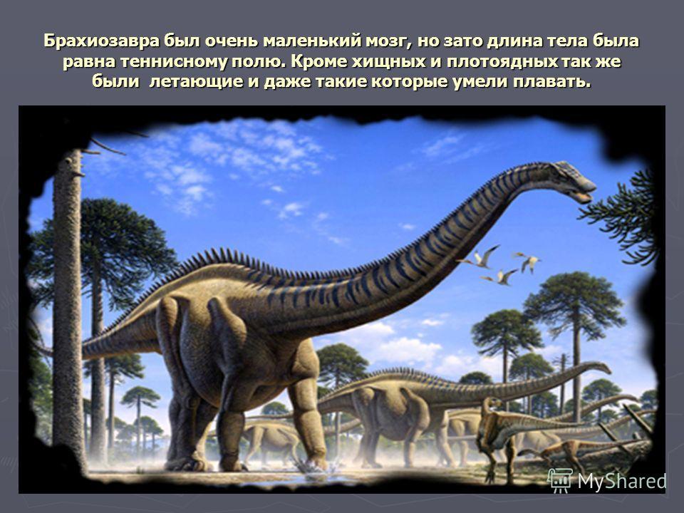 Брахиозавра был очень маленький мозг, но зато длина тела была равна теннисному полю. Кроме хищных и плотоядных так же были летающие и даже такие которые умели плавать.