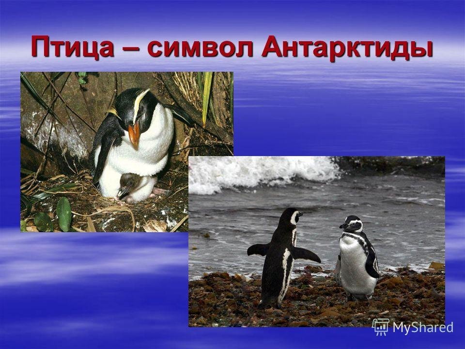 Птица – символ Антарктиды