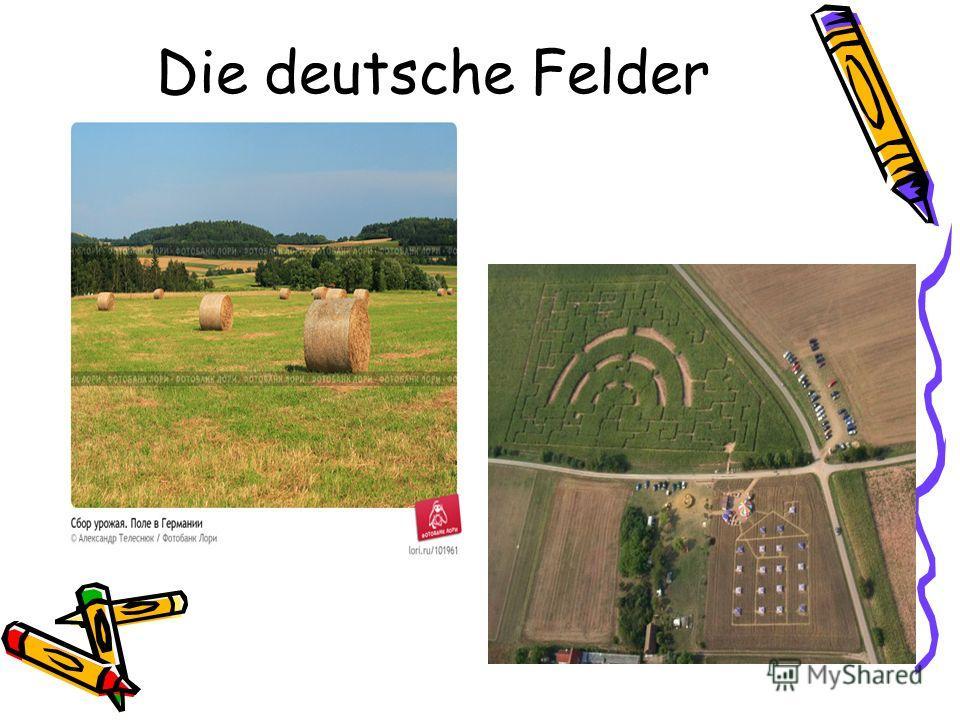 Die deutsche Felder