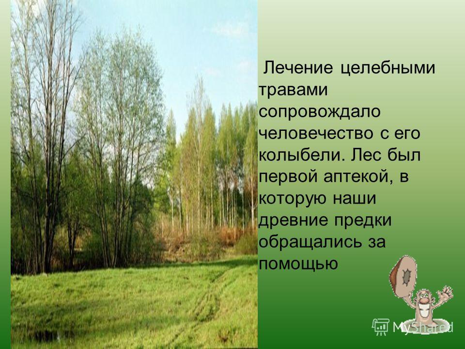 Лечение целебными травами сопровождало человечество с его колыбели. Лес был первой аптекой, в которую наши древние предки обращались за помощью