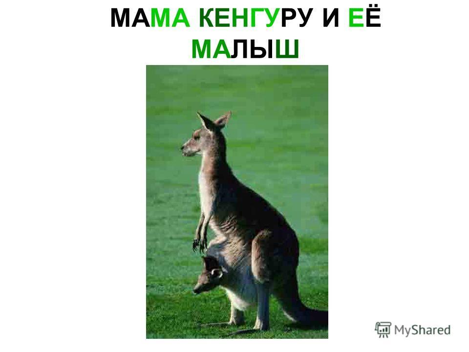 МАМА КЕНГУРУ И ЕЁ МАЛЫШ